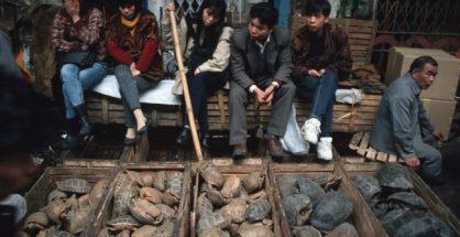 Na China, mercados voltam a vender morcegos e a esfolar animais no chão