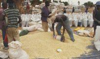 Governo cria reservas alimentares para reduzir índices de importação de produtos agrícolas