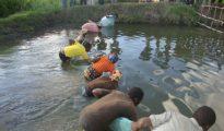 Governo reúne-se com importadores e produtores de ração para aquacultura