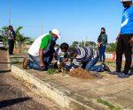 Arranca repovoamento de árvores na marginal da Cidade de Inhambane