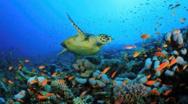 Autoridades de Pesca defendem conservação da Biodiversidade marinha