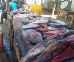 Covid-19: Suspensão de exportações inquieta sector pesqueiro em Sofala