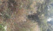 Terreno em Estevel 25/25 Fomento - imagem 1